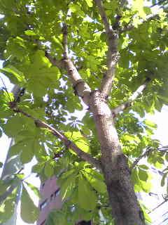 ホットミュージックスクールの前の木