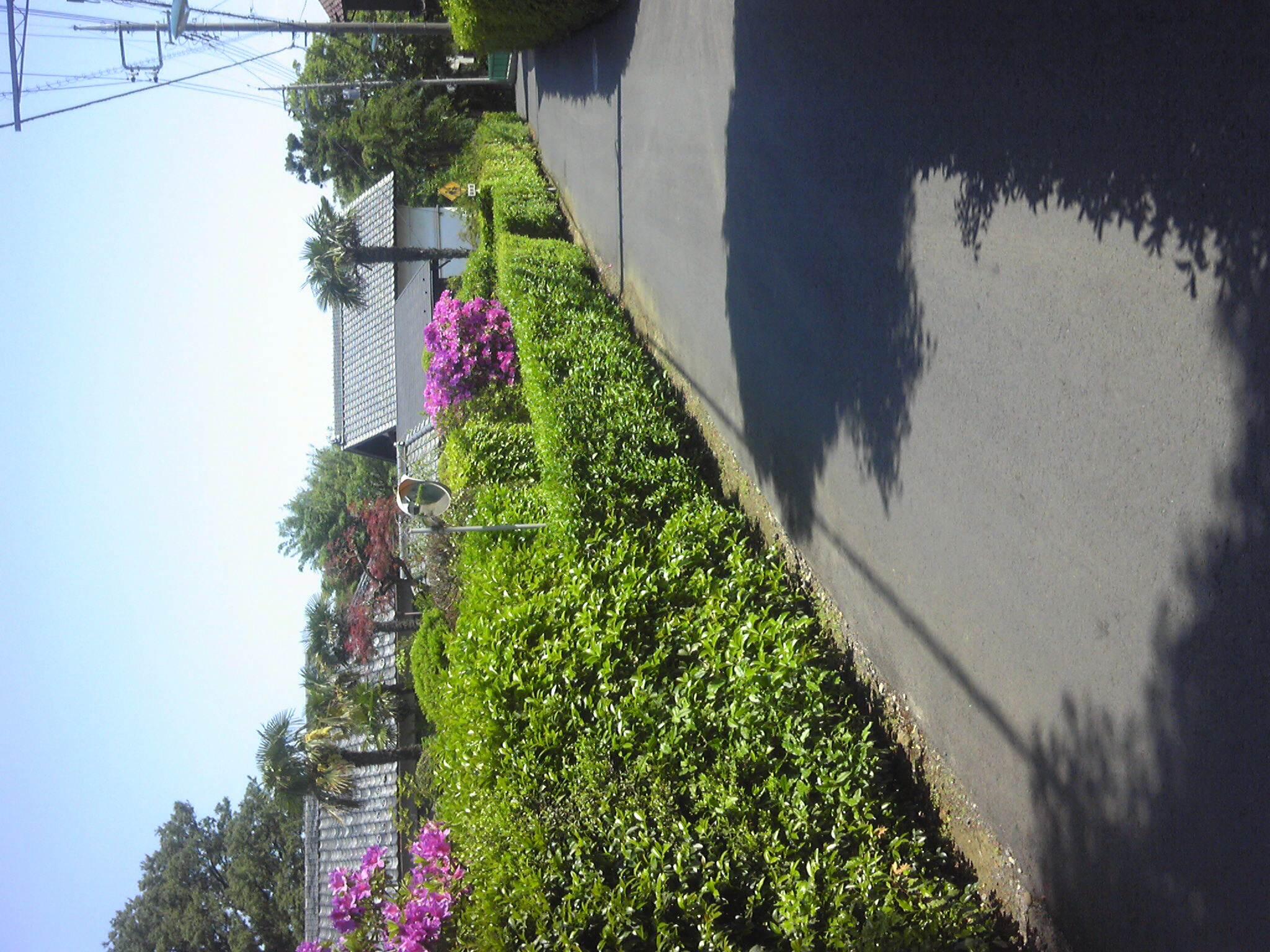 いい天気だ散歩した!